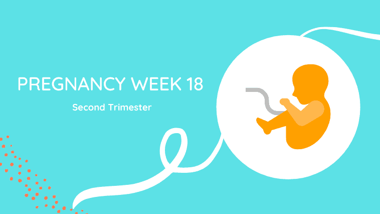 week 18 of pregnancy
