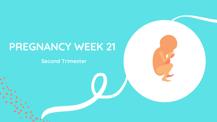 Week 21 of pregnancy